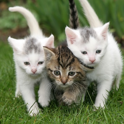 Three kittens running towards the camera.